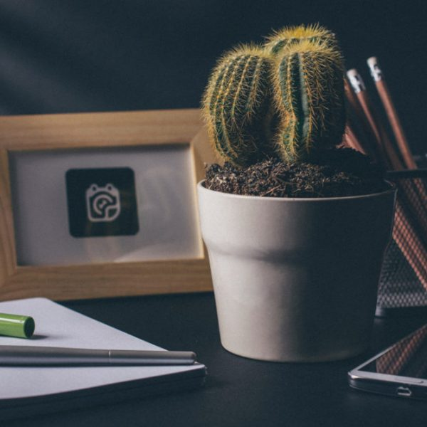 Various items on a desk - plant, photo frame, pencils, cell phone, notebook, pen